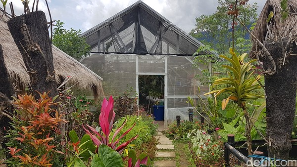 Taman Tondok Bakaru Orchid (TBO), yang berada di Desa Tondok Bakaru, Kecamatan Mamasa.