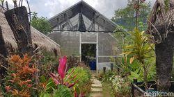 Tak Hanya Cantik, Taman Anggrek Mamasa Hasilkan Ratusan Juta Rupiah