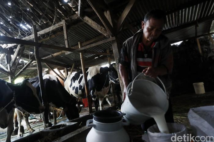 Provinsi Jawa Timur selama ini telah dikenal dengan potensi sapi perahnya, bahkan menjadi salah satu sentra sapi perah nasional.