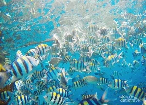 keragaman jenis ikan di bawah laut Friwen
