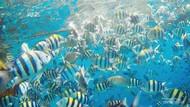 Tahukah Kamu? Ikan Juga Merasakan Sakit Seperti Manusia