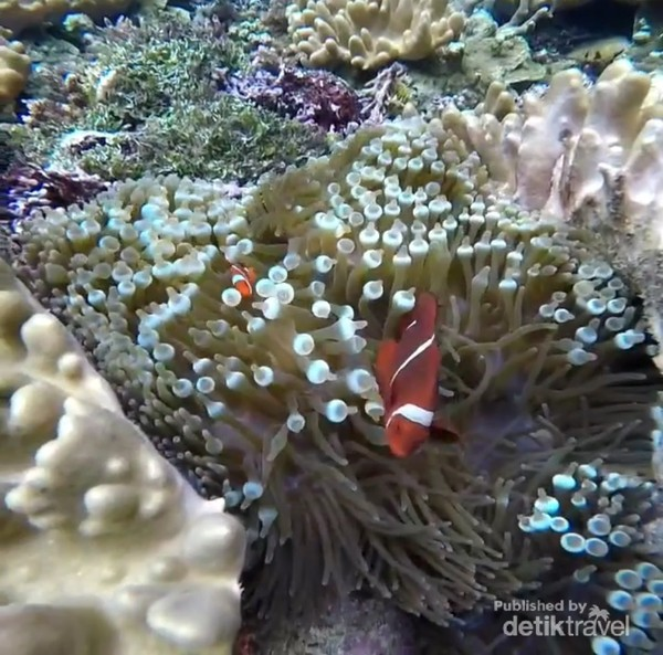 terumbu karang Friwen sangat estetik