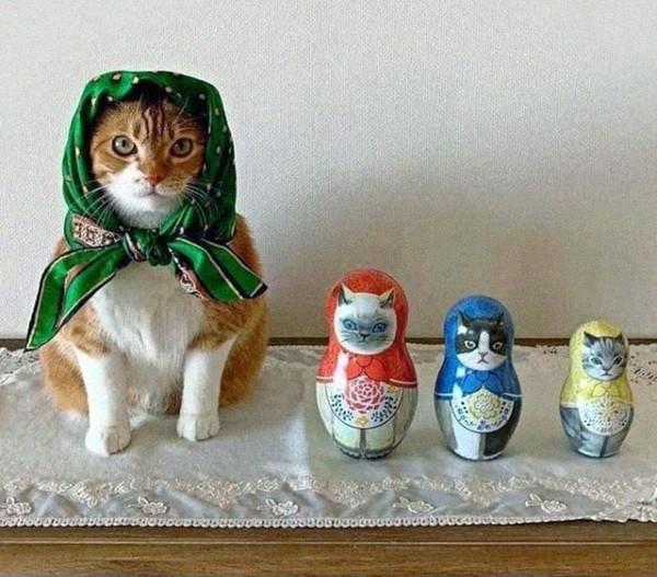 Di Rusia dan Polandia ada istilah babushka yang artinya nenek atau wanita tua. Di tahun 1970-an, wanita Rusia yang sudah lanjut usia umumnya menggunakan scarf segiempat untuk menutupi kepalanya. Sejak itu, gaya menutup kepala itu dikenal sebagai babushka. Kucing ber-babushka makin menggemaskan saat disandingkan dengan matryoshka (boneka ikonik Rusia).