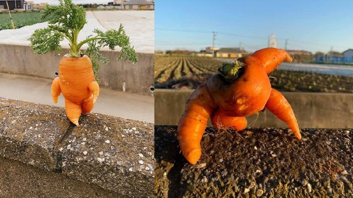 petani di jepang bagikan hasil panen wortel berbentuk unik di Twitter