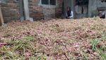 Setelah 15 Tahun, Petani Bawang Merah di Gunung Merbabu Panen Lagi