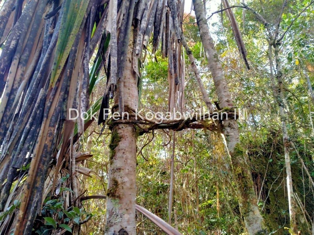Lokasi persembunyian KKB Papua