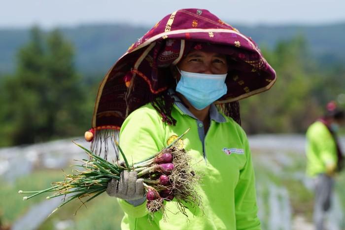 Petani di Food Estate Humbang Hasundutan