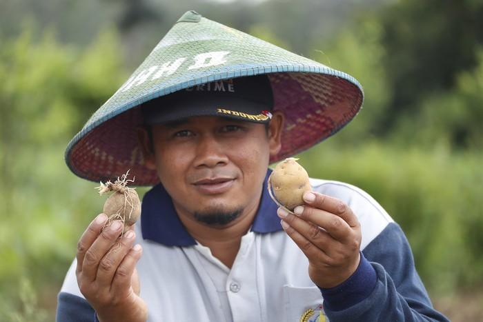 petani kentang