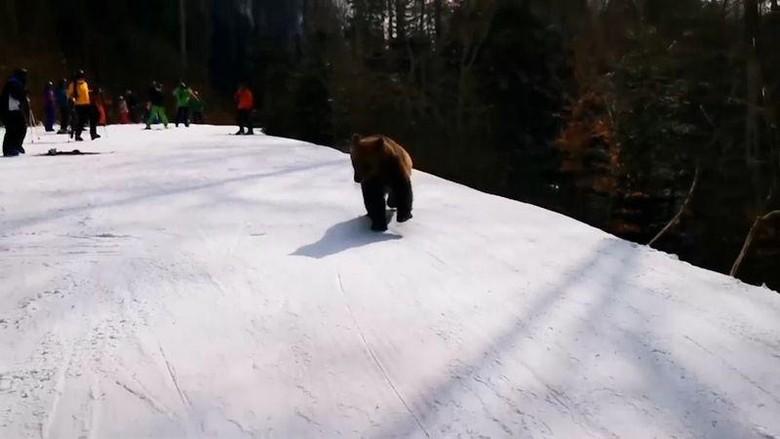 Turis dikejar beruang