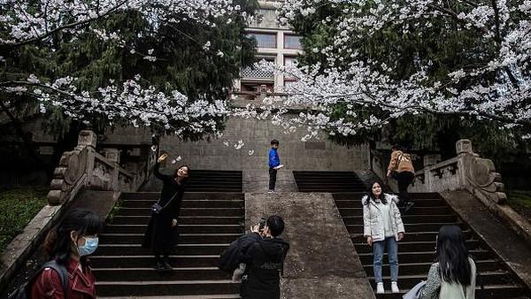 Dilansir dari Getty Images, Universitas Wuhan yang pertama kali didirikan pada tahun 1893 itu merupakan salah satu universitas paling indah di China. Tak heran, saat musim semi tiba warga pun berdatangan ke universitas itu untuk melihat bunga-bunga sakura yang bermekaran.