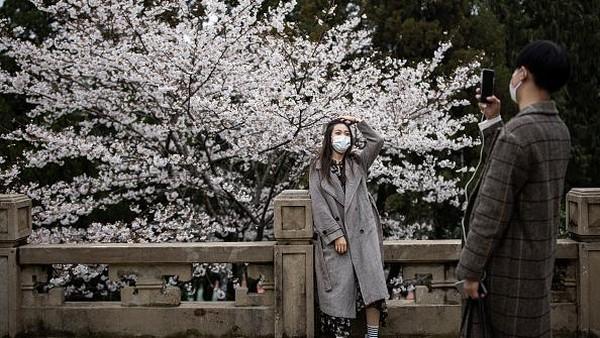 Momen mekarnya bunga-bunga sakura ini kerap dijadikan latar foto bagi para pencinta foto lho.