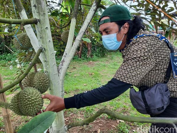 Desa Wisata Rancamaya dikenal sebagai penghasil berbagai jenis durian, mulai dari durian susu, durian mentega, durian pandan, dan lain-lain.