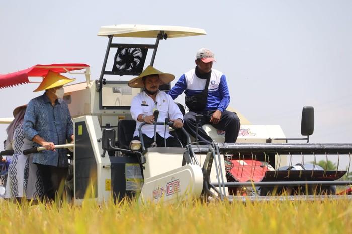 Menteri Pertanian Syahrul Yasin Limpo panen raya di Gresik