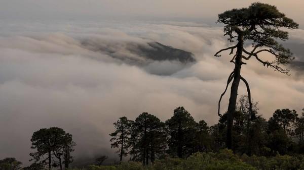 Pegunungan memliki luasan lebih dari 380.000 hektar, lebih dari dua kali luas London Raya. Bentang alamnya adalah pegunungan terjal, gurun gersang, dan hutan berkabut.