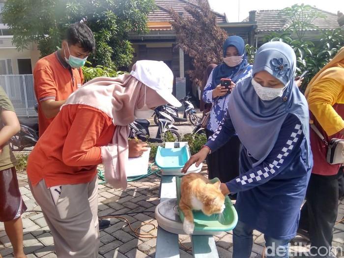 Untuk Anda pencinta kucing atau yang memelihara kucing, ada posyandu kucing di Lamongan. Seperti apa posyandu tersebut?