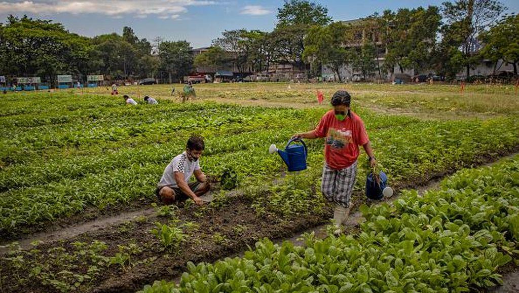 Kegiatan Ekonomi Utama Penduduk Filipina di Bidang Apa Saja? Cek di Sini