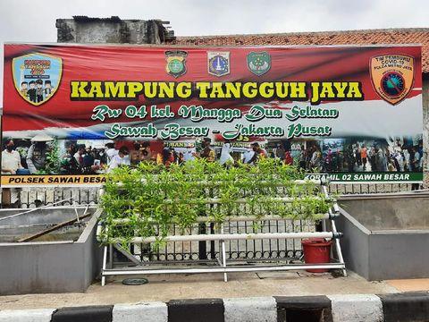Kampung Tangguh Jaya di Sawah Besar, Jakpus