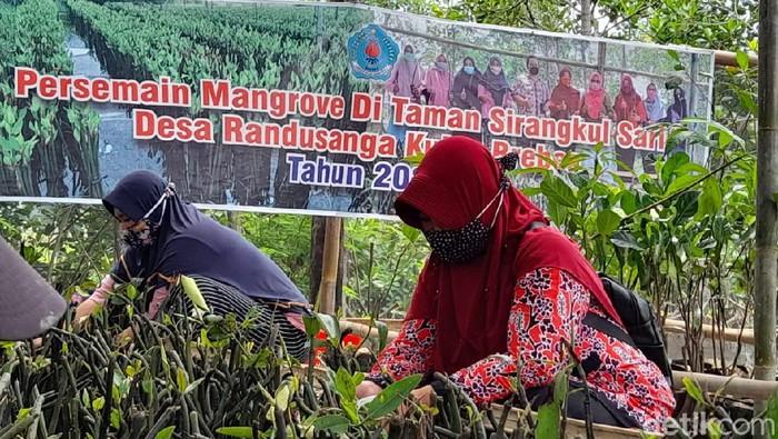 Kegiatan penyemaian bibit mangrove di Desa Randusanga Kulon, Brebes