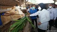 Jaga Produktivitas, Pemkab Banyuwangi Keliling Periksa Hewan Ternak