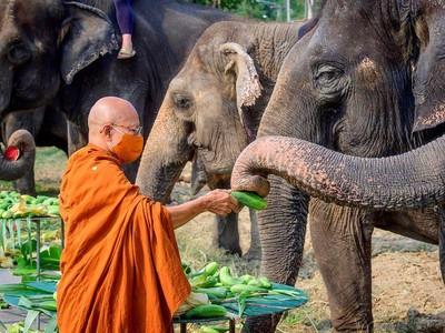 Thailand Dikenal dengan Sebutan Negeri Gajah Putih, Ini Alasannya