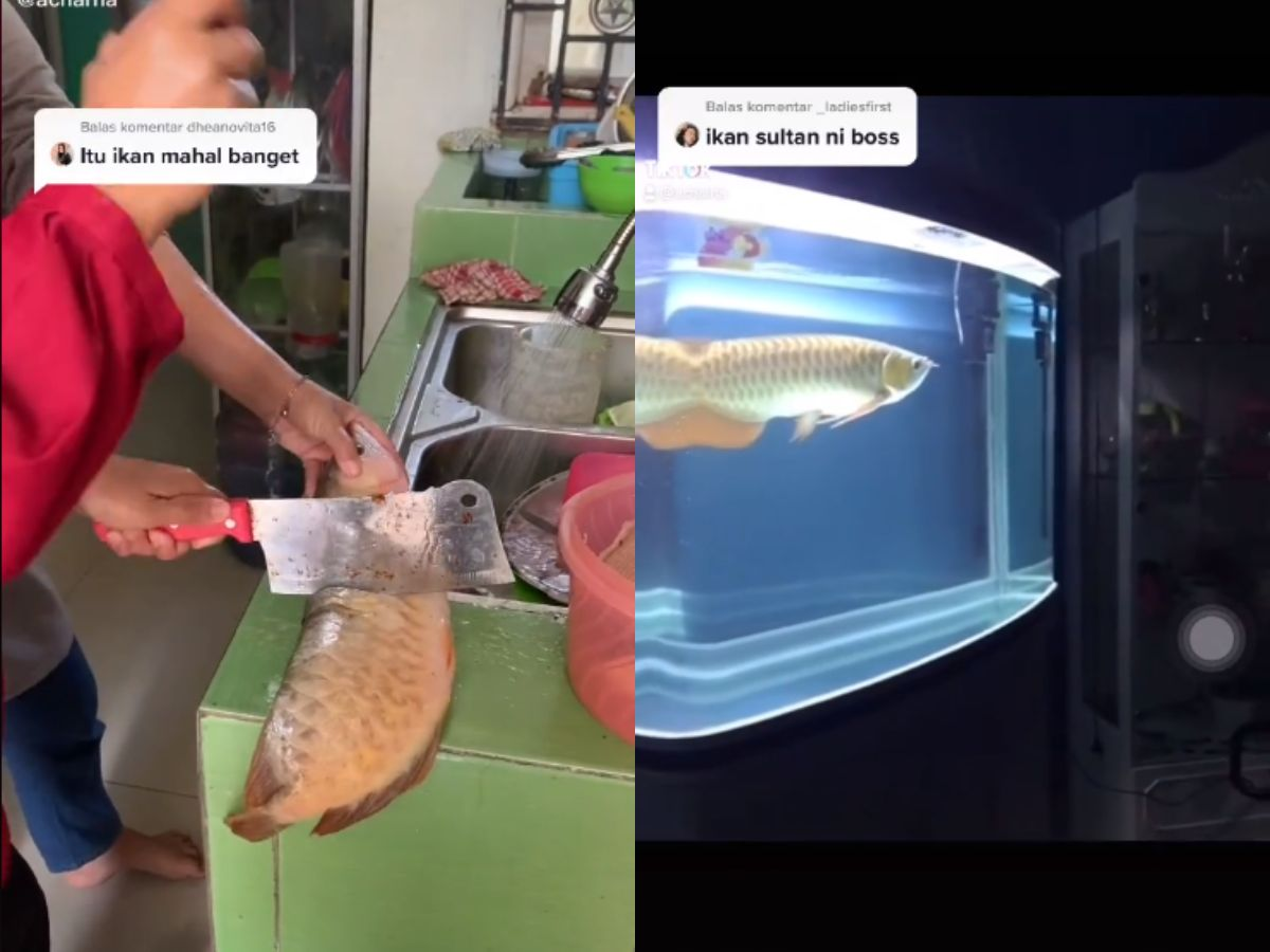 Sultan! Wanita Ini Masak Ikan Arwana Rp 10 Juta jadi Asam Pedas