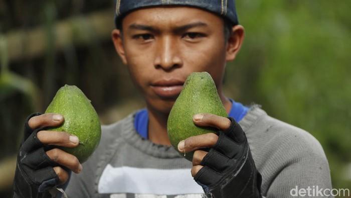 Malang terkenal dengan kesuburan tanahnya yang dapat ditanami berbagai buah-buahan. Mulai dari apel, jeruk, durian, hingga alpukat.