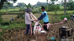 Unik,Pedagang Kopi di Ponorogo Hanya Mau Dibayar Pakai Gabah
