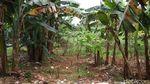 Inikah Lokasi Lahan Sarana Jaya yang Tersandung Korupsi DP 0 Persen?