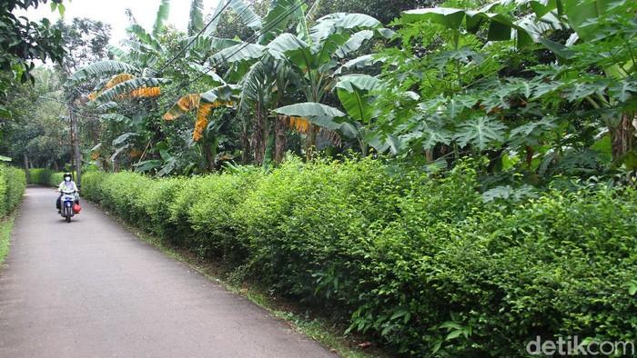 Pengadaan lahan yang dibeli PD Sarana Jaya di Cipayung, Jakarta Timur, kini menjadi perkara di KPK. Apa yang terjadi?