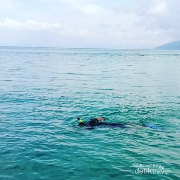 Berenang bersama penyu hijau di dermaga pulau pasoso