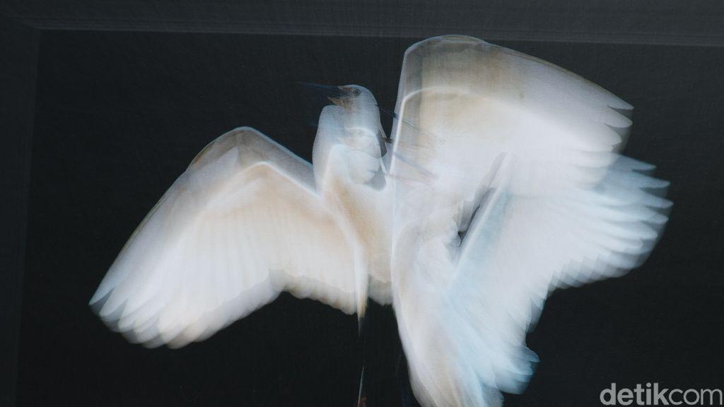 Menengok Keindahan Burung Blekok dalam Pameran Fotografi di Tahura Bandung