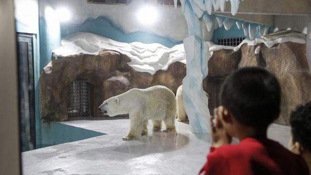 Hotel di China dengan kandang beruang kutub dikritik.