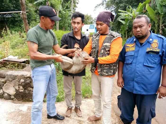 Kera liar bikin resah yang ditangkap di Karanganyar, Rabu (17/3/2021).