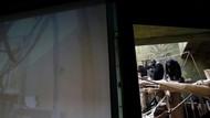Nggak Mau Kalah, Para Simpanse Ini Juga Hobi Virtual Meeting