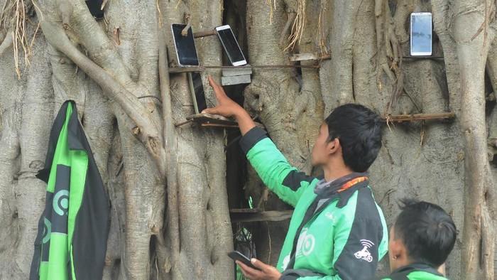 Seorang pengemudi ojek daring mengamati pesanan melalui telepon pintarnya yang diletakkan di pohon, Salatiga, Jawa Tengah, Rabu (17/3/2021). Pengemudi ojek daring di kawasan tersebut meletakkan telepon pintarnya pada batang pohon untuk mempermudah mendapatkan order pesanan makanan maupun layanan antara penumpang. ANTARA FOTO/Aloysius Jarot Nugroho/rwa.
