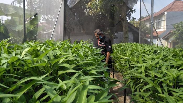 Urban farming di Bandung.