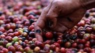 Jurus Petani Kopi RI Agar Bisa Tembus Pasar Luar Negeri