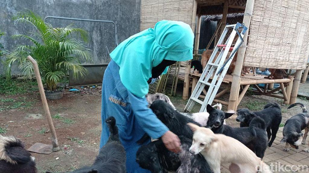 Pemkab Bogor Sarankan Hesti Wanita Bercadar Kurangi Anjingnya, Ini Alasannya
