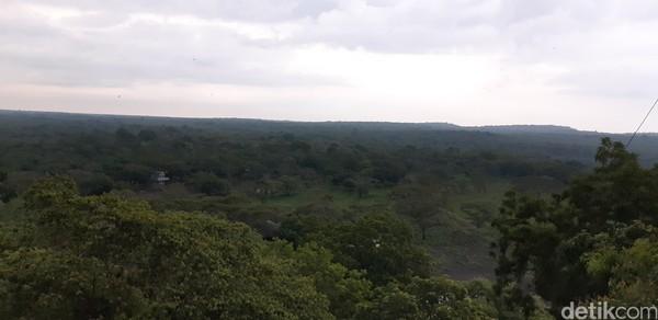 Dari sini akan terlihat hamparan hijau Taman Nasional Baluran.