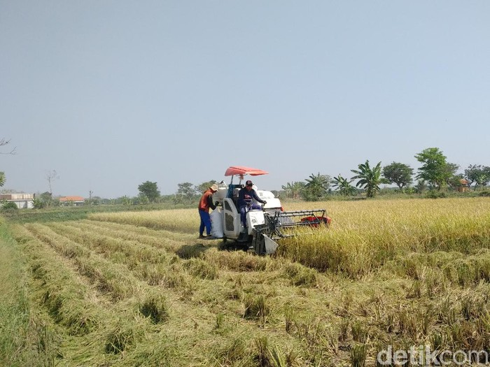 Rencana pemerintah untuk impor beras mendapat penolakan di Lamongan. Selain petani, Komisi B DPRD Lamongan juga menolak rencana tersebut.