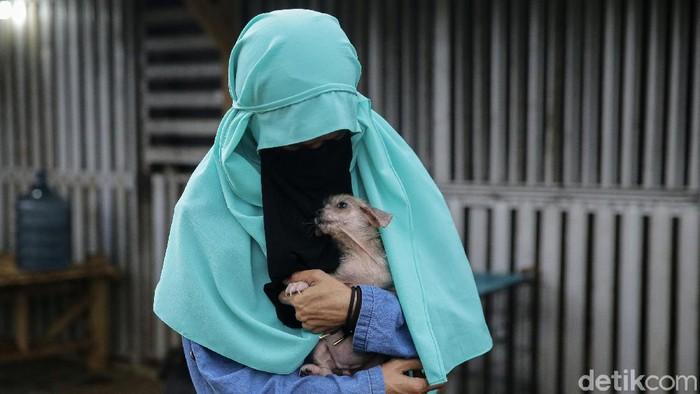 Wanita bercadar Hesti Sutrisno memelihara 70 anjing di Tenjolaya, Kabupaten Bogor. Hesti tak mempermasalahkan saat orang-orang mempertanyakan haram dan najis ketika merawat anjing.