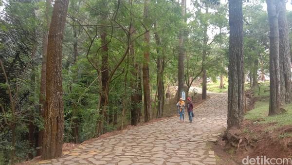 Sesampai di lokasi Pijar Park terdapat banyak pohon pinus yang menjulang tinggi. Suasana yang adem membuat wisatawan betah dan bisa santuy mengabadikan momen dengan berfoto bersama keluarga, teman atau orang terdekat. (Dian Utoro Aji/detikcom)