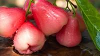 6 Manfaat Jus Jambu Merah, Disinfektan Tenggorokan Berlendir saat Batuk-Batuk