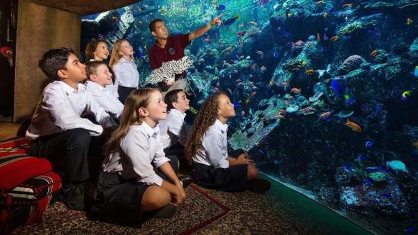 Tim biasanya melakukan penilaian kesehatan hewan laut misalnya mengambil sampel darah atau melakukan rontgen pada hewan yang berpotensi cedera. (2021 Atlantis, The Palm Dubai)