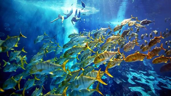 Semua hewan laut dijaga dan dipelihara dengan baik. Lebih dari 100 spesialis perawatan hewan berkontribusi di rumah sakit ikan (CNN)