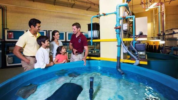 Wisatawan bisa mempelajari akan kehidupan bawah laut. Selain itu juga mengetahui bahwa tak semua hewan yang terlihat menyeramkan itu berbahaya. (2021 Atlantis, The Palm Dubai)