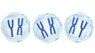 Kromosom: Definisi, Fungsi dan Penentuan Jenis Kelamin