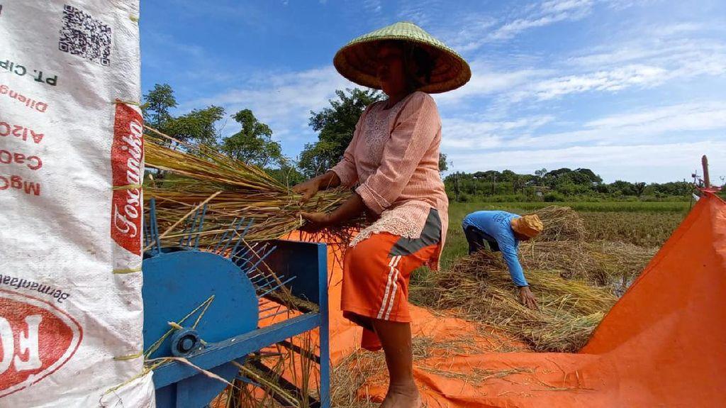 NTP & NTUP Naik, Kementan: Pertanda Baik bagi Kesejahteraan Petani