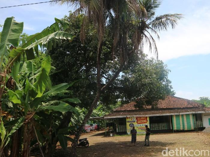 Pohon kelapa bercabang 9 di Jepara, Senin (22/3/2021).