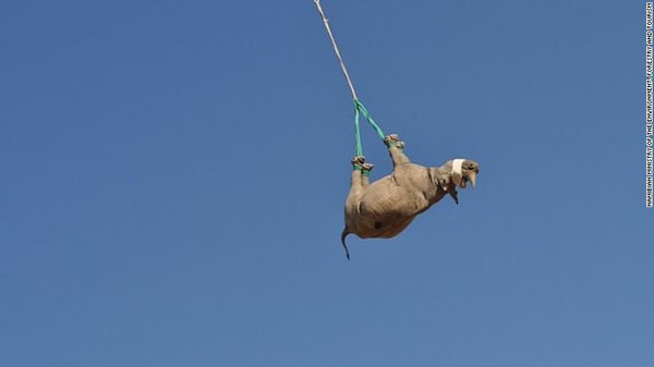 Yipii... badak terbang terbalik Foto: CNN